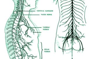 Nervous system and spine
